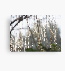 Sparkling ice crystals on weeping willow Canvas Print