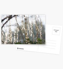 Sparkling ice crystals on weeping willow Postcards