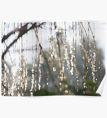 Sparkling ice crystals on weeping willow Poster