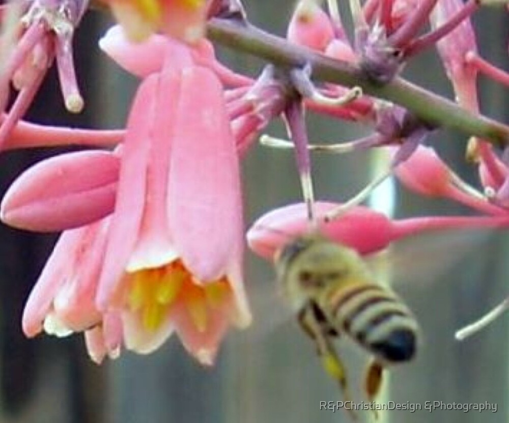 Just Buzzing Around by R&PChristianDesign &Photography