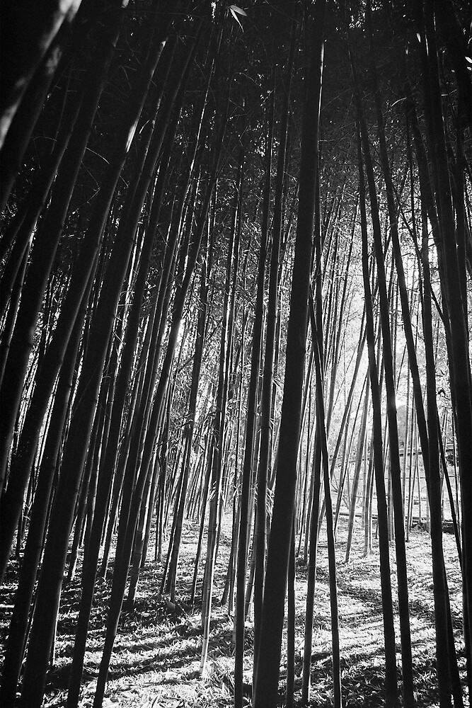 Bamboo Forest by Carly Michael