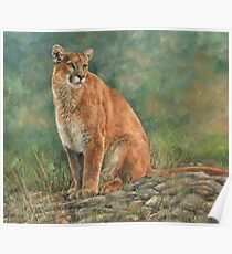 Mountain Lion / Cougar Poster