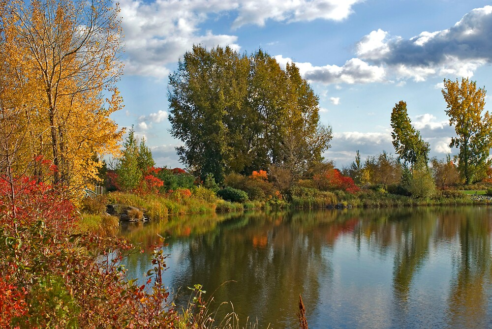 Fall by Idil