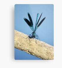 Damselfly on La Vienne river, Loire, France Metal Print