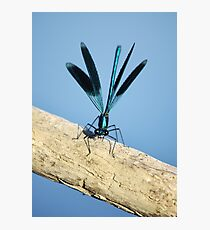 Damselfly on La Vienne river, Loire, France Photographic Print