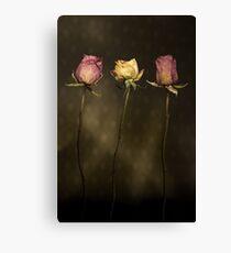 3 Roses Canvas Print
