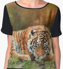 Amur Tiger Resting Women's Chiffon Top