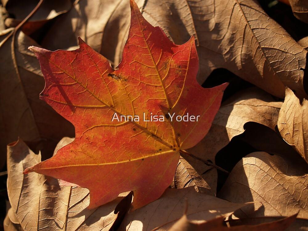 Sugar Maple Leaf  backlit in Dry Leaves by Anna Lisa Yoder