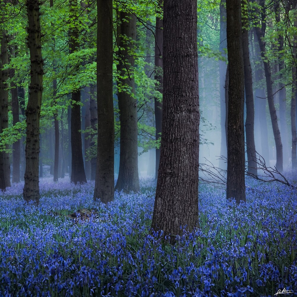 Misty Blue by redtree