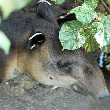 Baird'sTapir by OrphieG