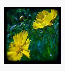 Flowers.Series 1 Photographic Print