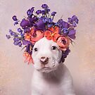 Flower Power, SunChip by SophieGamand