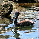 Pelican l by Daniela Weil