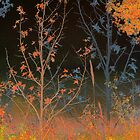 Autumn Meadow by Susan Nixon