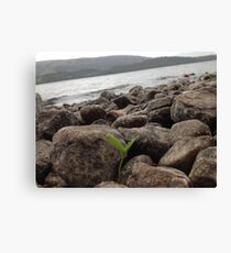Life on the edge of Loch Ness Canvas Print