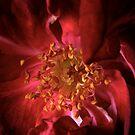 rose core by Loreto Bautista Jr.