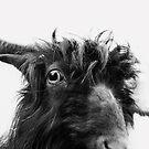 Charlie the goat by Dorit Fuhg