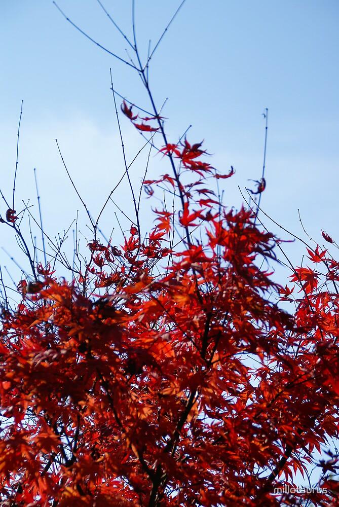 Autumn in Lodz's Botanic Garden 011 by millotaurus