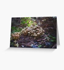 Woodland fairy mushrooms in Thetford forest, England Greeting Card