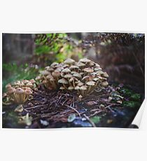 Woodland fairy mushrooms in Thetford forest, England Poster