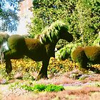 Le cheval Canadien - The Canadian Horse by Shulie1