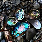 Washed up Paua by Ken Wright
