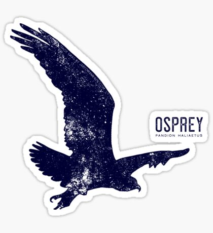 Osprey Taking Flight Sticker