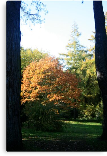 Between two Trees by Iani