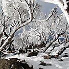 Snowgums 3 by David Sundstrom