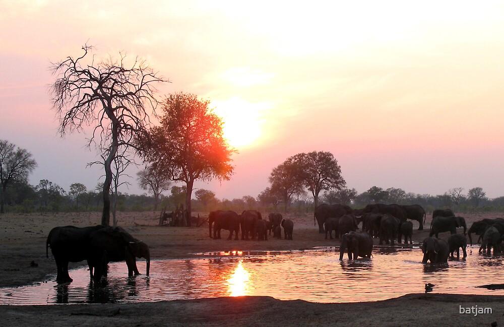 Sunset Supper, Hwange National Park, Zimbabwe by batjam