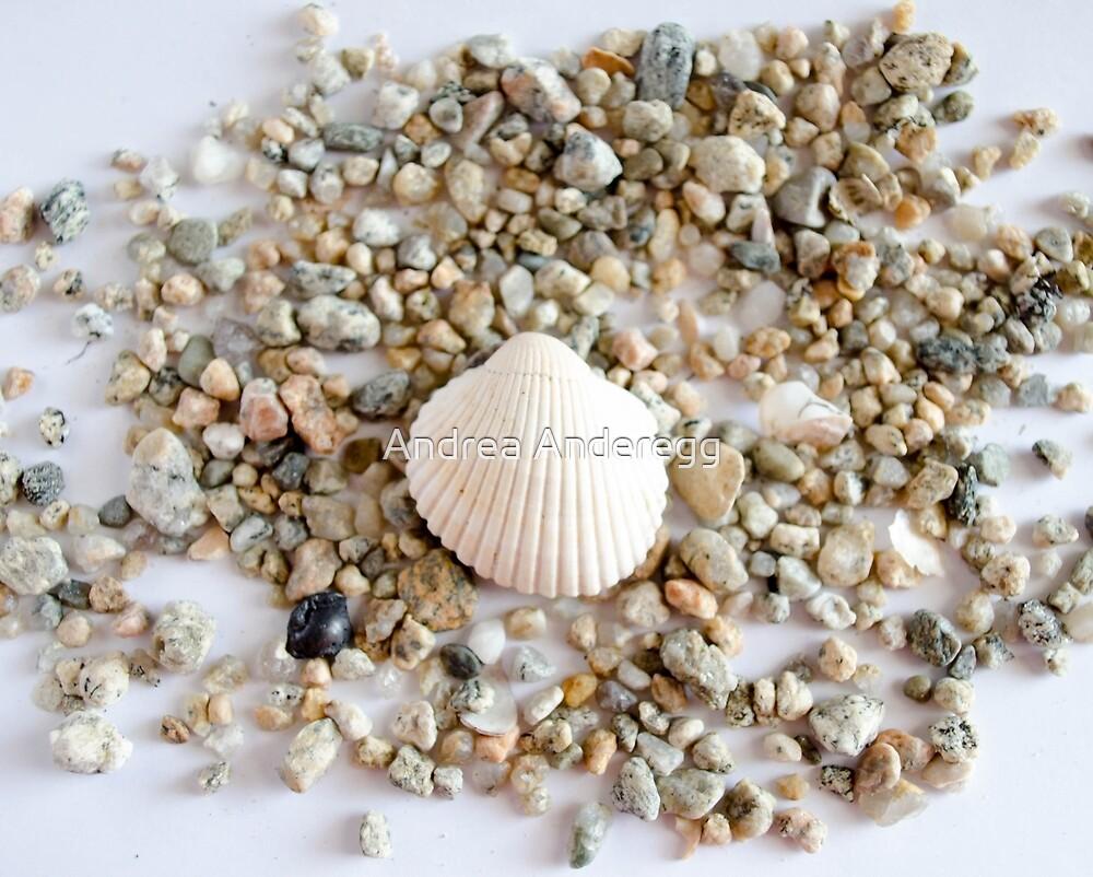Seashell 3 by andreaanderegg