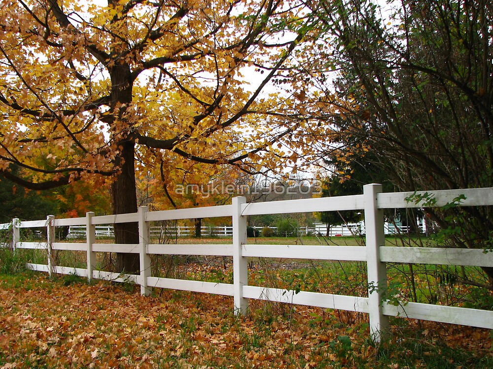 The White Fence by amyklein196203