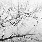 Fallen Tree Over Frozen Lake by April Koehler
