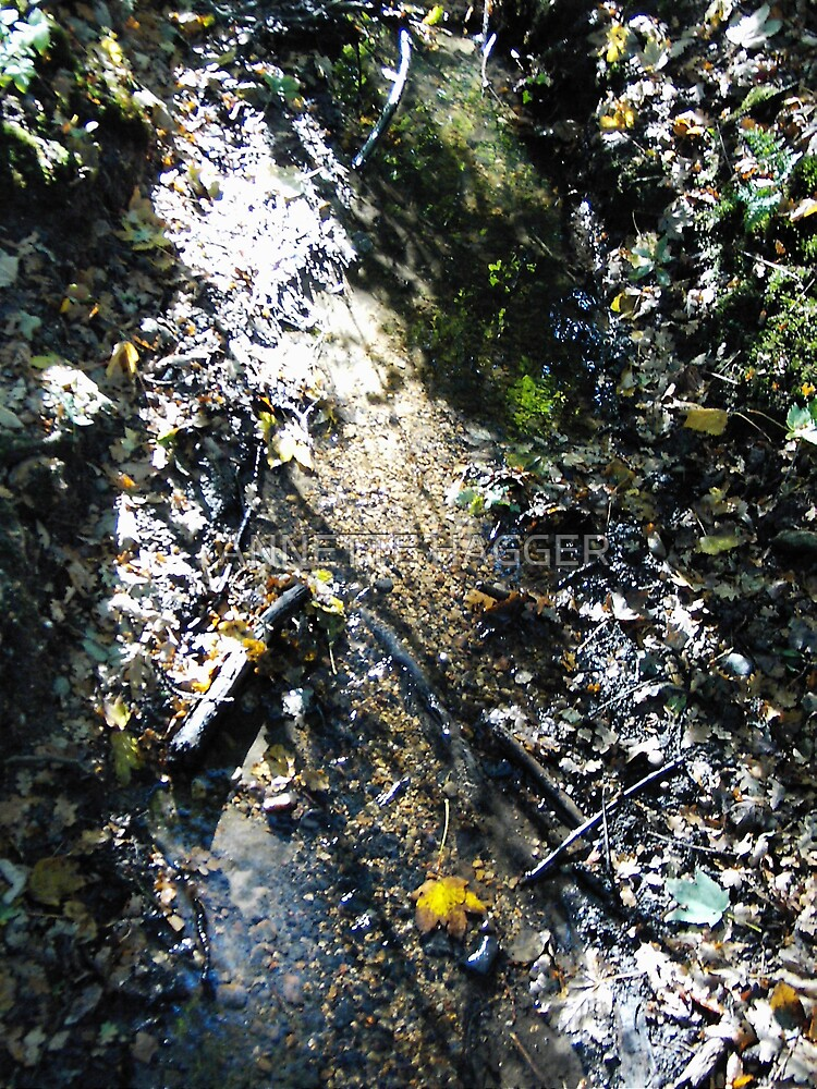 RUNNING WATER IN PORINGLAND WOOD by ANNETTE HAGGER