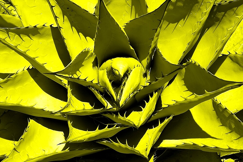 Yellow Cactus by Aaron Kittredge
