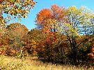 Golden Field, Bold Autumn Colors by NatureGreeting Cards ©ccwri