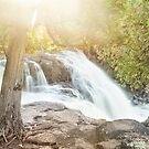 Two Cedars, Sunshine, & Waterfall by April Koehler
