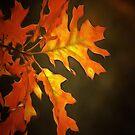 Autumn Glow by shutterbug2010