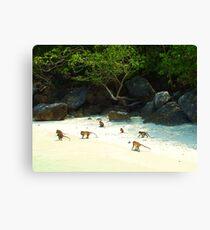 Monkey Beach Canvas Print