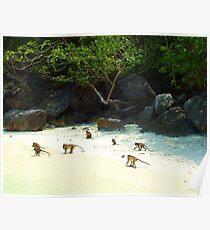 Monkey Beach Poster