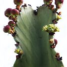 Natural Cactus Art by Heather Friedman