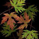 Leaves on Leaves by Marsha Tudor