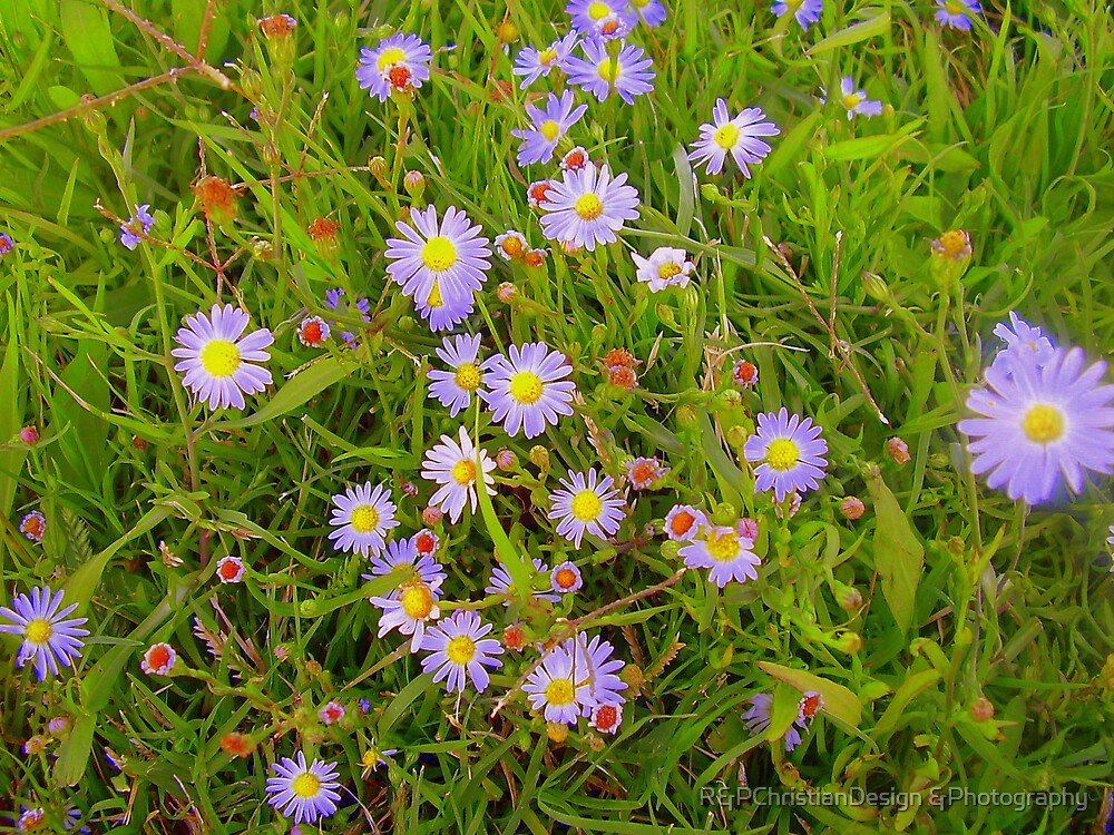 Field Of Wildflowers by R&PChristianDesign &Photography