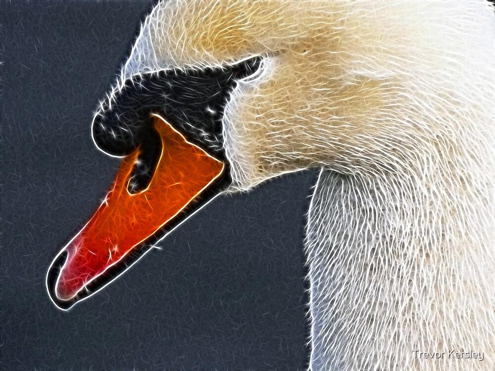Swan by Trevor Kersley