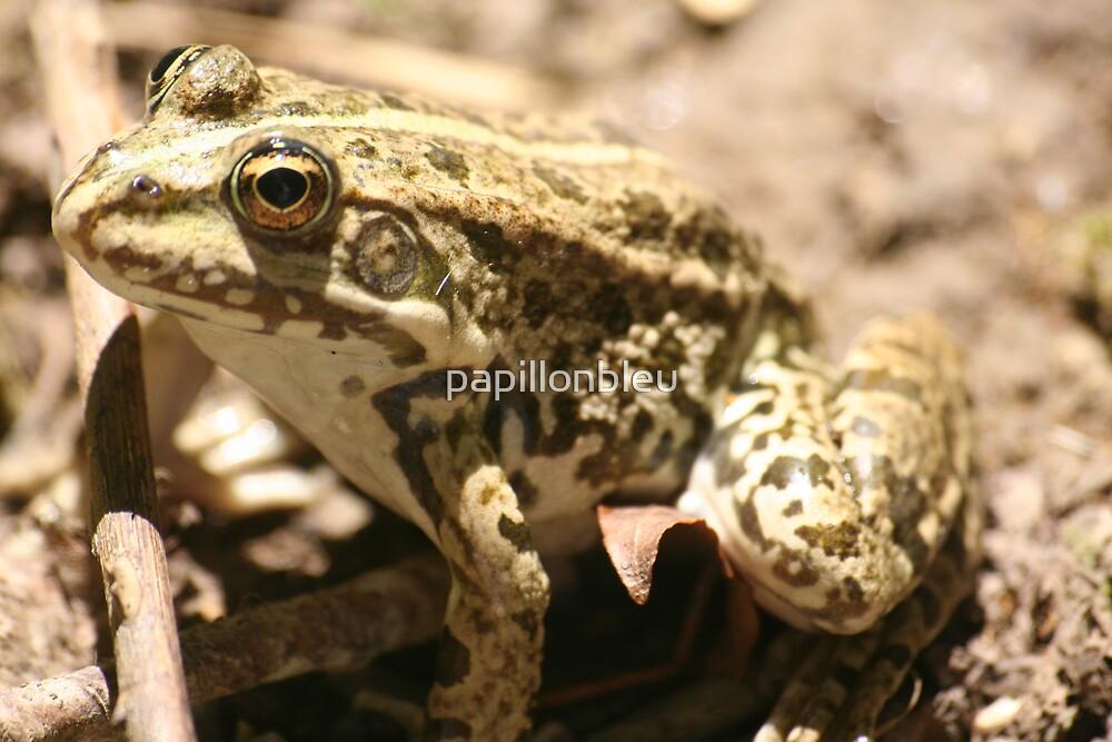 Frogbather by Pamela Jayne Smith