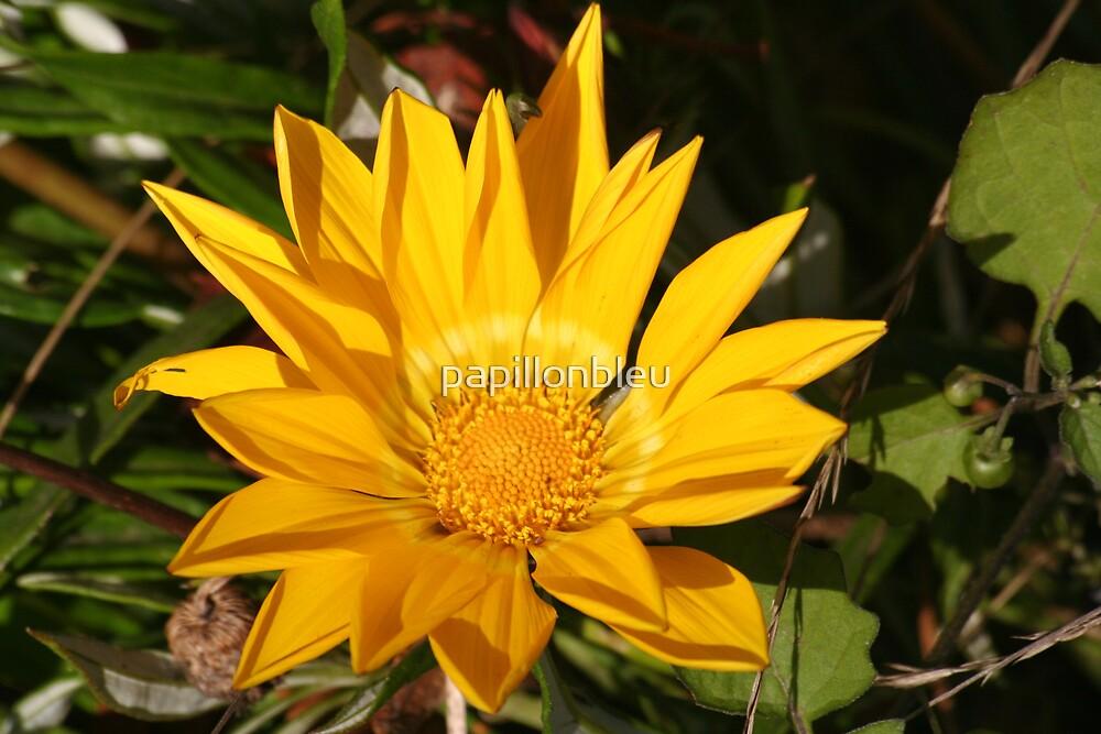 Yellow Gazania Flower by Pamela Jayne Smith