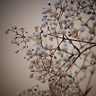 Blossom by Brian Canavan