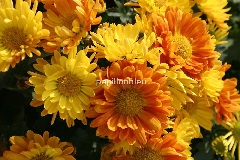 Bright Bouquet by Pamela Jayne Smith