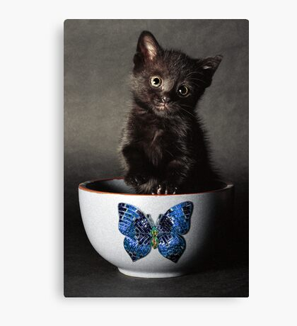 Little Butterfly Guy Canvas Print