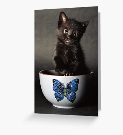 Little Butterfly Guy Greeting Card